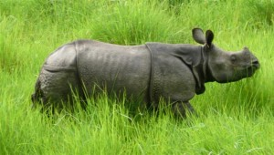 Tour in Chitwan National Park